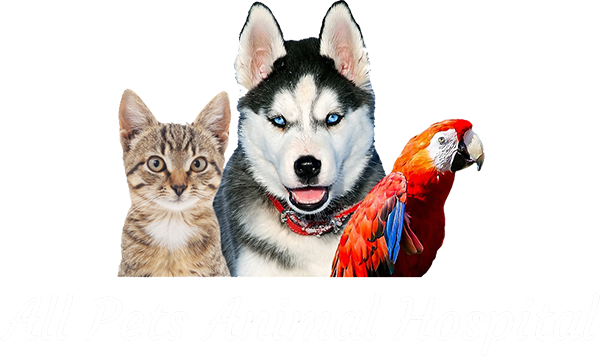 Veterinarian In Ames Ia All Pets Animal Hospital